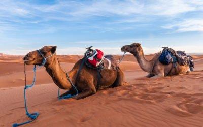 Merzouga Wüstensafari (von/nach Marrakesch)
