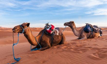 Merzouga desert safari (from/to Marrakech)